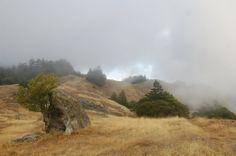 Mount Tamalpais Watershed - Google Maps I love the drifting fog :)