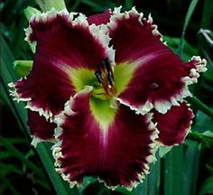 Fotos De Flores Naturales (6)