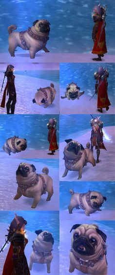 The World of Warcraft Pug (in-game pet.) Awarded to players who participate in a set number of Pick Up Games (PUGS.) The animator has to be a pug person, as the pug has most of the real ones mannerisms. (Note: some shots taken after the pug ate a magic biscuit that made it bigger.)