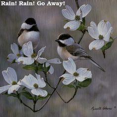 Rain.gif (500×500)