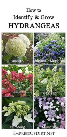 Hydrangeas are one of the most beloved plants in our gardens and for good reason—they are gorgeous. Many gardeners have questions about pruning, colour changes (pink or blue), basic care, transplanting, and how to get stubborn ones to bloom. This simple Shade Garden, Garden Plants, Flowering Plants, Bamboo Garden, Container Gardening, Gardening Tips, Organic Gardening, Vegetable Gardening, Gardening Quotes