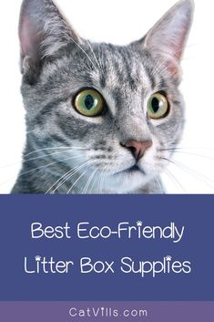 Want to create a more eco-friendly cat litter box for your feline friend? Read on for 5 products that will help, including boxes, liners, and litter! Cat Lover Gifts, Cat Lovers, Lovers Gift, Cat Apartment, Best Litter Box, Cleaning Litter Box, Clumping Cat Litter, Outdoor Cats, Blue Cats
