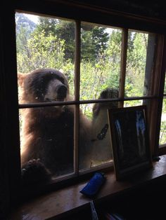 Helloooo.... anyone home?