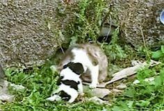 Kat bevalt van een puppy!  (video)