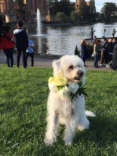 nothing dressed up a party like a floral collar for your dog.