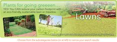 All the groundcovers - STEPABLES.COM - Plants that tolerate foot traffic