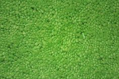 Windrush. Hot!Green. Felted custom size chunky shag pile rug. #prestigecarpets #wool #carpet #shagpile #custommade #chunky