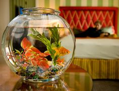 For something a bit more timid, check in to one of Kimptons Hotel Monacos. All of the hotels around the country, through the Guppy Love program, loan guests a complimentary goldfish to keep you company during your stay. Dont worry about feeding it, either: The staff is trained to feed and care for the fish. (Hotel Monaco)