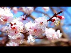 Healing Chinese ZEN music of Anxiety & Stress To pacify the body & Mind Relax Music Qi Gong, Chakra Meditation, Meditation Music, Mindfulness Meditation, Vida Natural, Salud Natural, Calming Music, Relaxing Music, Tai Chi For Beginners
