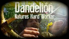 Dandelion, Natures Hard Worker | with Herbal Guest Dr. Terry Willard Ph.D. | Harmonic Arts - YouTube