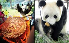 Left: A giant panda named Qing Feng looks at a big moon cake at Nanshan Zoo. Right: A panda eats a specially-baked moon cake at Suzhou Taihu National Wetland Park to mark China's traditional  Mid-Autumn Festival