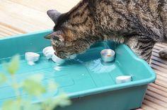 Coole Tipps für den heißen Sommer für Katzen.