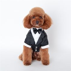 Dog Wedding Clothes For Male Dogs Apparel Sizes S-XXL