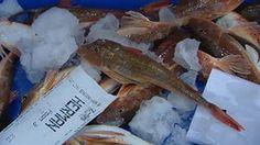 Van vis in de zee, naar vis in de winkel Fish, Pisces