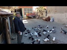 KÜMES ZİYARETLERİ (VISITING PIGEON LOFTS)