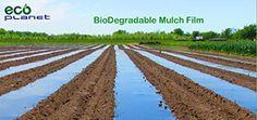 EcoPlanet Bio-degradable Agricultural Plasticulture Black...