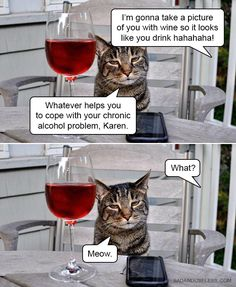 An image tagged meme,funny cat,drinking,hilarious Funny Animal Memes, Funny Cat Videos, Cute Funny Animals, Animal Quotes, Funny Cats, Animal Humor, Funny Memes, Funny Shit, Funny Stuff