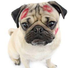 Connais-tu le chien pug DOUG, la nouvelle star du web?