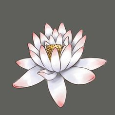 How to Draw a Lotus Flower in 7 Steps