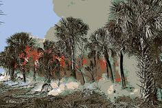 a Florida wilderness area burns out of control in the dry summer heat.