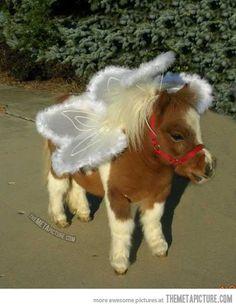 anim, angel wings, halloween costumes, mini horses, miniature horses, ponies, fairy costumes, fairi, angels