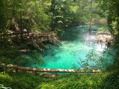 A long-time Old Florida swimming hole along SR 6 between the towns of Lee and Jasper, Madison Blue Spring is a sinkhole pouring out a first-magnitude spring into the Withlacoochee River.