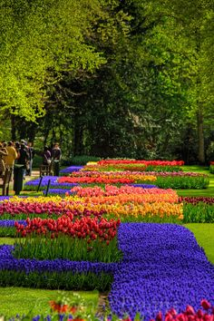 Keukenhof Gardens, The Netherlands. In Lisse, my mother's hometown. This is even more beautiful in person.