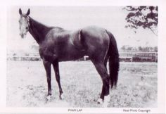 Famous Horses in History | ... Lap, the most famous race horse in Australian history. (15/03/2011