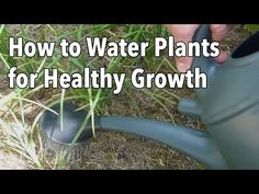 ▶ Watering Your Vegetable Garden: How to Water Plants for Healthier Growth - YouTube