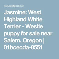 Jasmine: West Highland White Terrier - Westie puppy for sale near Salem, Oregon | 01bcecda-8551