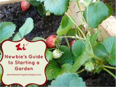 Life as a Rinnagade: Newbie's Guide to Starting a Garden...with FREE Printable