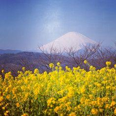Beauty of Japan, Image credit Kunito Imai