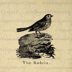 Digital Graphic The Robin Printable Antique by VintageRetroAntique