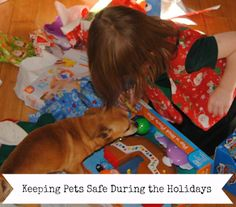 Keeping Pets Safe During The Holidays PLUS GIVEAWAY!