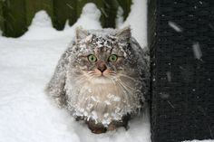 Snow kitty. My cat loves the snow.