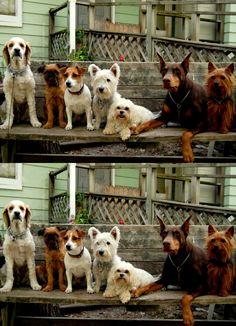 Que Pets: Encuentra Las 10 Diferencias