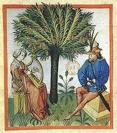 Date tree. From Tacuinum Sanitatis; German, 15th century.