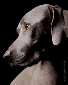 I want this dog. It is soooo beautiful!