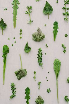 Using spring tonic herbs like nettle, dandelion and cleavers can support your body's detox pathways and can bring the body back into balance. Everyday Detox Tea, Herbal Tea Benefits, Herbal Teas, Lactation Room, Dandelion Root Tea, Types Of Herbs, Tea And Books, Alternative Health, Medicinal Plants