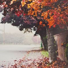 Found on Tumblr. ❤️ #fall #sweaterweather #cozyweather #autumn #october #pumpkineverything #foreverfallandhalloween #autumnleaves #fallenleaves #iloveautumn #instagood #instadaily #crunchyleaves #sweaterweater #hotcocoa #ilovefall #bonfires #crispyautumnair #duvets #blankets #wrappingup #gettingsnug #pumpkinspicelatte #cinnamonstick #tumblrfindings