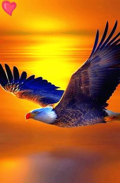 Foto animada Eagle Pictures, Nature Pictures, Cool Pictures, Beautiful Pictures, Eagle Drawing, Wings Like Eagles, Eagle Art, Birds Of Prey, Native American Art