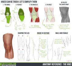 무릎의 구조에 관한 스터디입니다. 뼈와 근육의 구조를 잘 설명했네요. 무릎 그리기 어려워하시던 분들은 참고하세요. 출처는 http://Conceptcookie.com