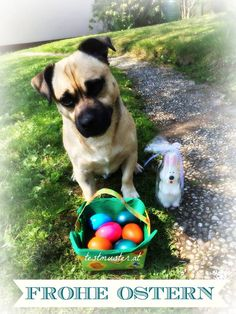 Osterwünsche ♡ - Fräulein Musters Welt Blog, Animals Dog, Funny Pics, World, Xmas, Craft