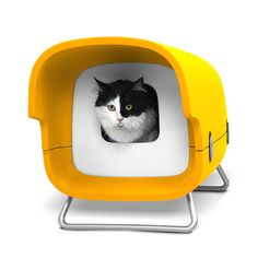 Blink cat house ~ for outdoor cats...BUT look at that face! Such a shayna punim