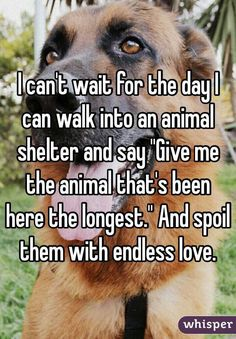 """""""I can't wait for the day I can walk into an animal shelter and say """"Give me the animal that's been here the longest."""" And spoil them with endless love. """""""