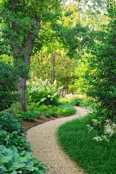 Curvaceous pea gravel path directs through a woodland garden