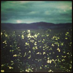 faded summer #Instant110 #photography #nature #webstagram #statigram #summer #flowers #instagood