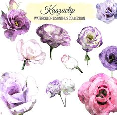 Watercolor Lisanthus Collection  Commercial and by kaazuclip