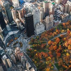 Bird's-eye view of some fall foliage in Central Park !