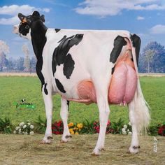 Gado Leiteiro, Radha Krishna Wallpaper, Farm Life, Cows, Cattle, Pet Birds, Ranch, Dairy, Animals
